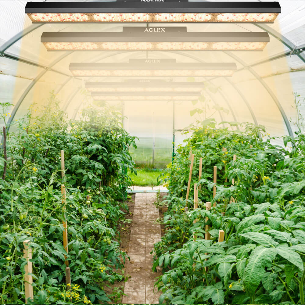 led grow light for farm