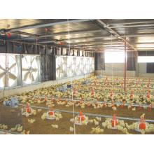 Type de contrôle automatique Maison de poulet avec équipements
