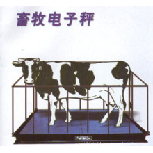 Escala de gado com cerca forte