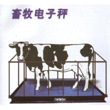 Шкала крупного рогатого скота с сильным забором