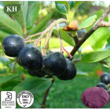 Extrato de Chokeberry preto puro natural Polyphenol 10% -30%; Antocianidina 1% ~ 25%