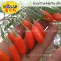 Medlar Skin Care Goji Berry