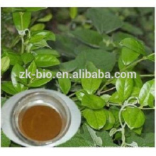 nouveau produit de haute qualité gymnema sylvestre extrait