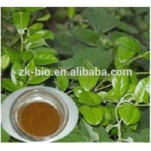 Extrato de alta qualidade novo produto gymnema sylvestre