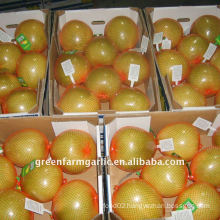 Chinese New Honey Pomelo Corps