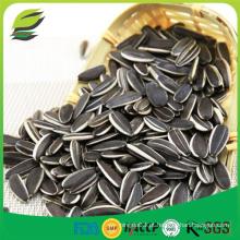Sementes de girassol chinesas baratas com alta qualidade