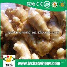 2014 neue Ernte-Marktpreis für frische Ingwerwurzel Linyi Herkunft
