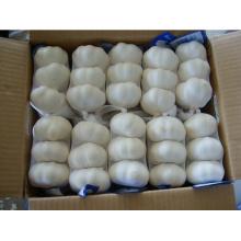 2015 Китай Новый урожай (чистый / нормальный) Белый свежий чеснок