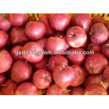 Ганьсу яблоко / Свежий Хуаниу / Хуаниу яблоко от происхождения