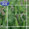 Прессованное плетение поддержки завода 8gsm для сельского хозяйства , цветок или в зернах