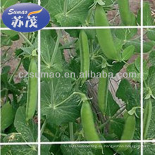 Soporte sacado de la planta que empaqueta 8gsm para la granja, la flor o el grano de la agricultura