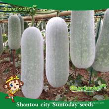 Suntoday comprar sementes de hortaliças sementes de jardim online para venda orgânica chiqh gua sementes de melão de cera (19006)