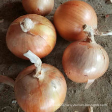 Exported Standard Quality of Chinese Fresh Yellow Onion