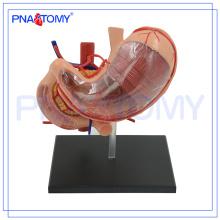 PNT-0458 Biologisches Modell des heißen Verkaufs menschlichen Magens