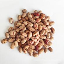 Cranberry Beans Light Speckled Kidney Beans