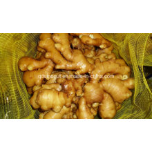 Super Quality Chinese Fresh Ginger