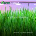 Крытый вертикальной полке саженцы зеленый выращивания ростков пшеницы трава расти системы
