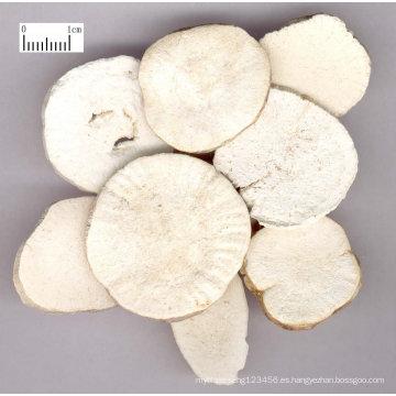 Radix Trichosanthis en polvo