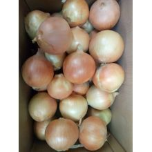 Shandong Good Quality Fresh Onion For Sale