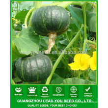 JPU07 Tianma high yield yellow flesh hybrid pumpkin seeds f1