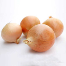 Fresh agricultural products onion yellow exporter