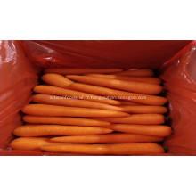 légumes frais carotte fraîche