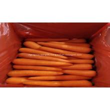 fresh vegetables fresh carrot