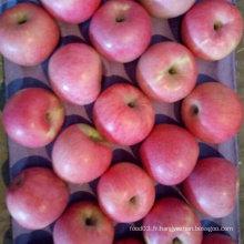 Bonne qualité de pomme fraîche Qinguan