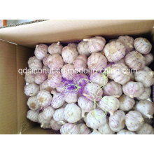 China Red Garlic 6.0cm