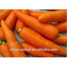 Vente en gros de carottes chinoises fraîches