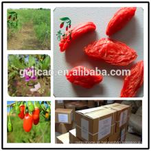 Bagas de goji de alta qualidade (SO2 grátis), Goji orgânico certificado da UE, fábrica certificada, goji HACCP, suco de wolfberry, óleo de goji, goji