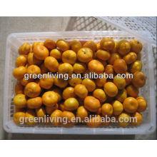 mandarin orange sweet orange  fruits