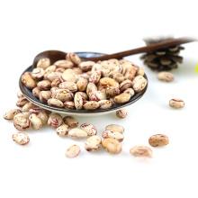 Leichte gesprenkelte Kidneybohne / Pinto Bean / Sugarbohne