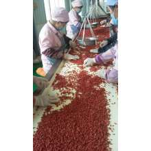 Organic Goji Berry USDA Certified, Ningxia Goji Berry, Chinese Wolfberry