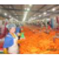250-300g precio de las zanahorias orgánicas