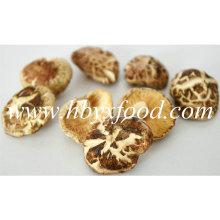 3-4cm Secado Delicioso K Shiitake Cogumelo