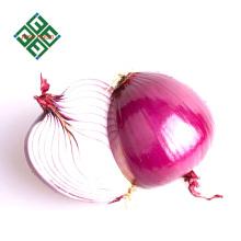 frische rote Zwiebeln Größe 8cm zum Verkauf