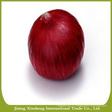 2016 nouvelle saison, légumes frais, oignon rouge fraîche