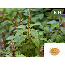 Weight Management Forskolin 10%, 20% Coleus Forskohlii Extract