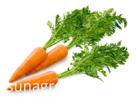 Healthy Organic Carrot