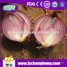 Big Red Onion Lieferant