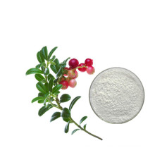Hot Sale Bearberry Extract Powder 99% Alpha Arbutin For Skin Whitening