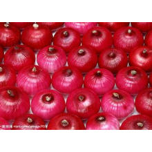 Low Calories Healthy Fresh Red Onion With 10kg / 15kg Mesh