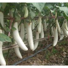 HE04 Sebei long white hybrid eggplant seeds for planting