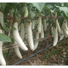 HE04 Sebei sementes de berinjela híbridas brancas para plantio