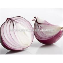 Pure Red Onion Price ton