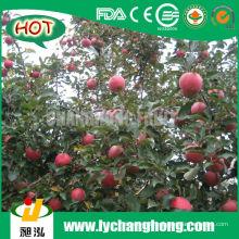 Chinesische rote Fuji Äpfel
