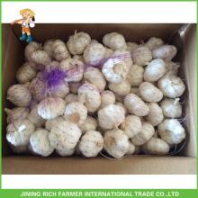 Fresh Red Garlic In China (200g, 250g,500g,1kg)