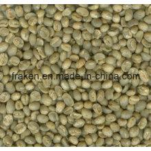 Extrait de grains de café vert à haute teneur en acide chlorogénique