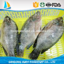 Fornecer bom preço tilápia carne congelada e frutos do mar